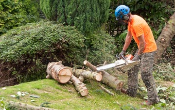 additional services offered by Staines Green tree surgeons