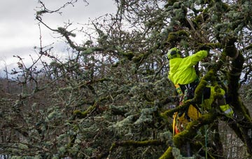 experienced Staines Green arborists are needed