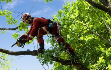 find trusted rated Staines Green tree surgeons in Hertfordshire