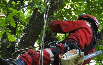 hiring professional Staines Green tree surgeons