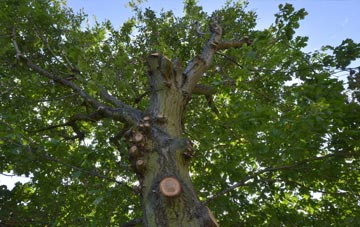what is Staines Green tree surgery?