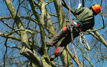 tree surgery Staines Green, Hertfordshire