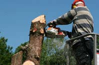 Staines Green felling services