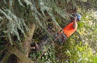 free Staines Green tree surgery quotes